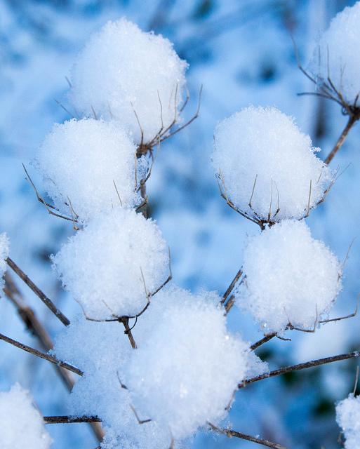 """Snowers"" by Johan Neven"