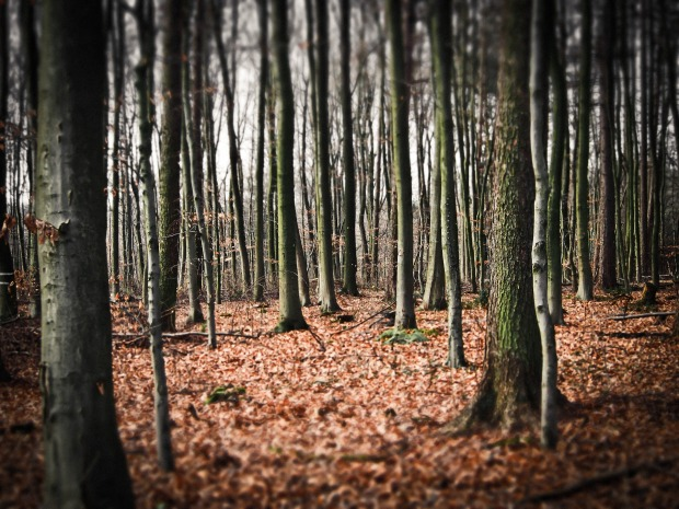 forest-1152238_1920